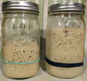 My Sourdough Starters
